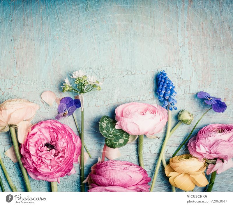 Nature Plant Blue Flower Lifestyle Blossom Love Background picture Style Design Pink Decoration Retro Birthday Blossoming Romance