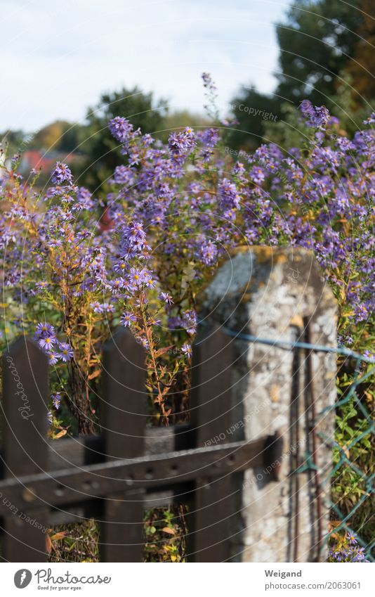 roadside Plant Fragrance Violet Garden Fence Flower country lust Country life Sky Gardening Town Exterior shot Deserted