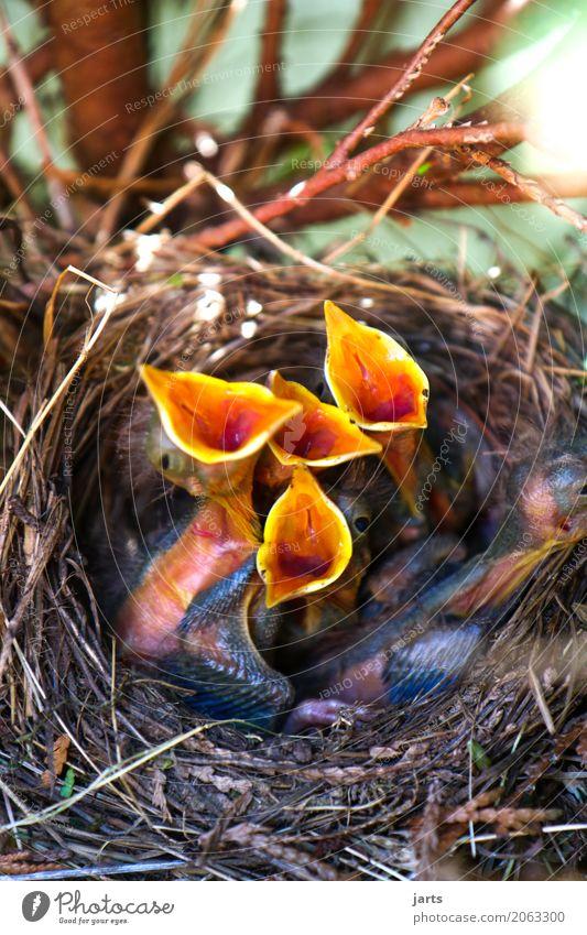 Nature Tree Animal Baby animal Spring Bird Wild animal Appetite Scream Sing Blackbird Nesting place