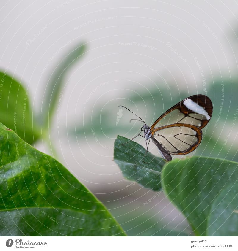 Posing!!!!! Environment Nature Plant Animal Spring Summer Leaf Foliage plant Agricultural crop Wild plant Garden Park Meadow Wild animal Butterfly Animal face