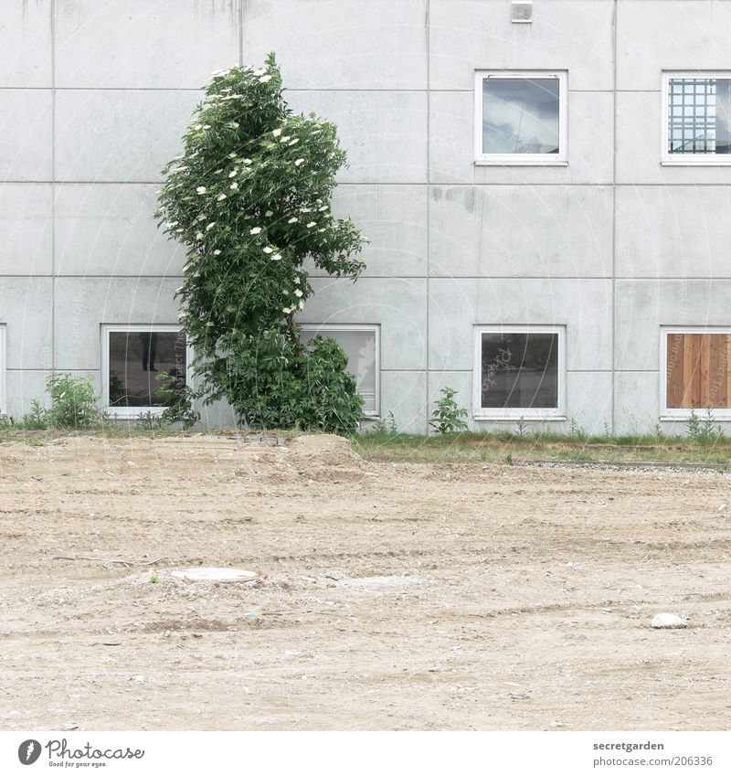 Nature Tree Green Plant Window Spring Gray Building Sand Architecture Concrete Earth Facade Growth Places Gloomy