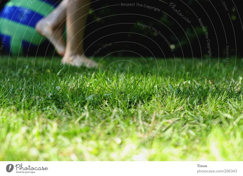 Human being Child Green Blue Sports Meadow Playing Movement Garden Feet Legs Going Ball Lawn End