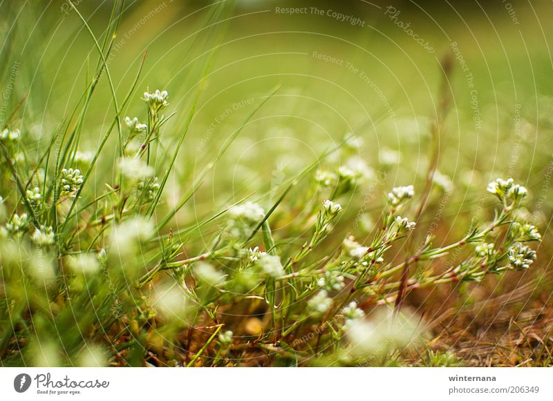 Green will of life Nature Plant Flower Life Movement Happy Freedom Field Earth Elegant Power To enjoy Uniqueness Warm-heartedness Might Hope