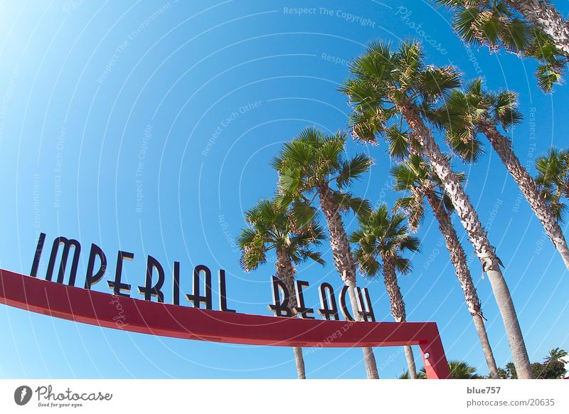 Imperial Beach California Palm tree Letters (alphabet) Red Green Fisheye Wide angle Leisure and hobbies USA Characters Sky Beautiful weather Blue