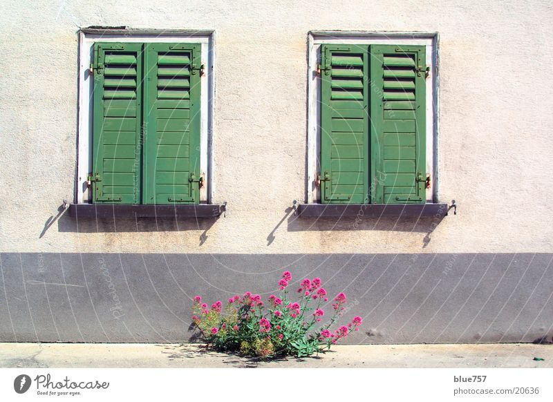 Two windows Window Shutter Green Closed House (Residential Structure) Wall (building) Facade Gray Plant Red Architecture