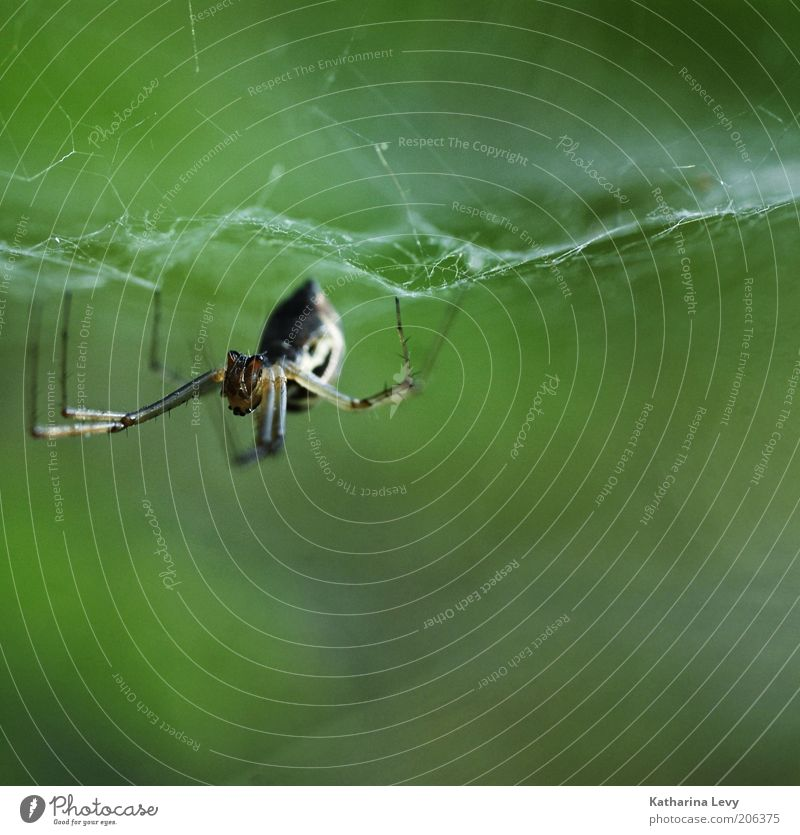 Nature Green Animal Brown Fear Net Wild animal Symbols and metaphors Disgust Build Spider Hideous Endurance Diligent Spider's web