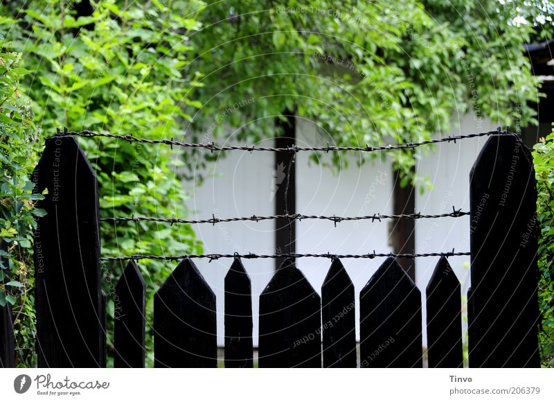 Neighbour's mysterious garden Wall (barrier) Wall (building) Garden Thorny Safety Fence Wooden fence Barbed wire Tree Bushes Remote Gardening Dark Green Black