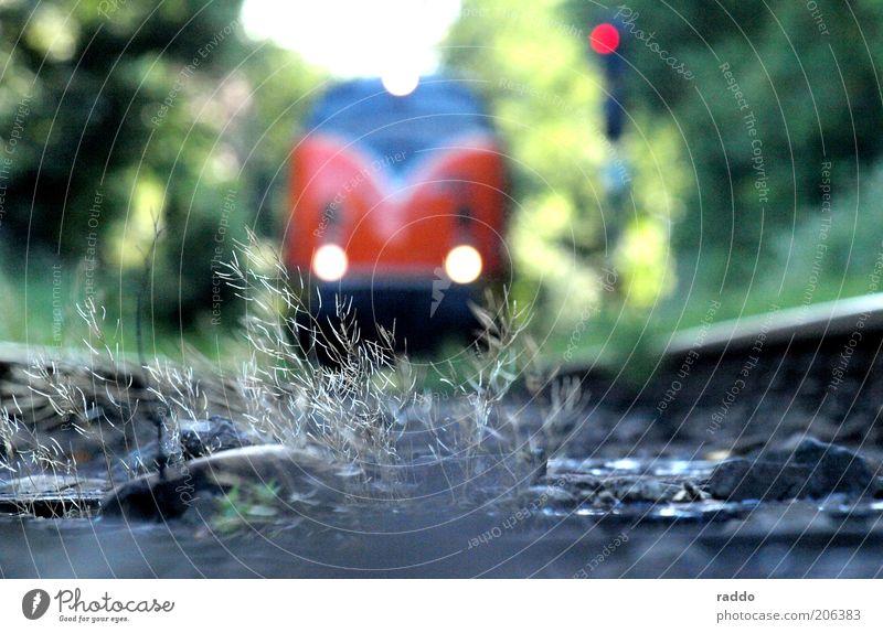 Nature Green Plant Red Gray Transport Railroad Perspective Esthetic Retro Dangerous Driving Bushes Near Threat Railroad tracks