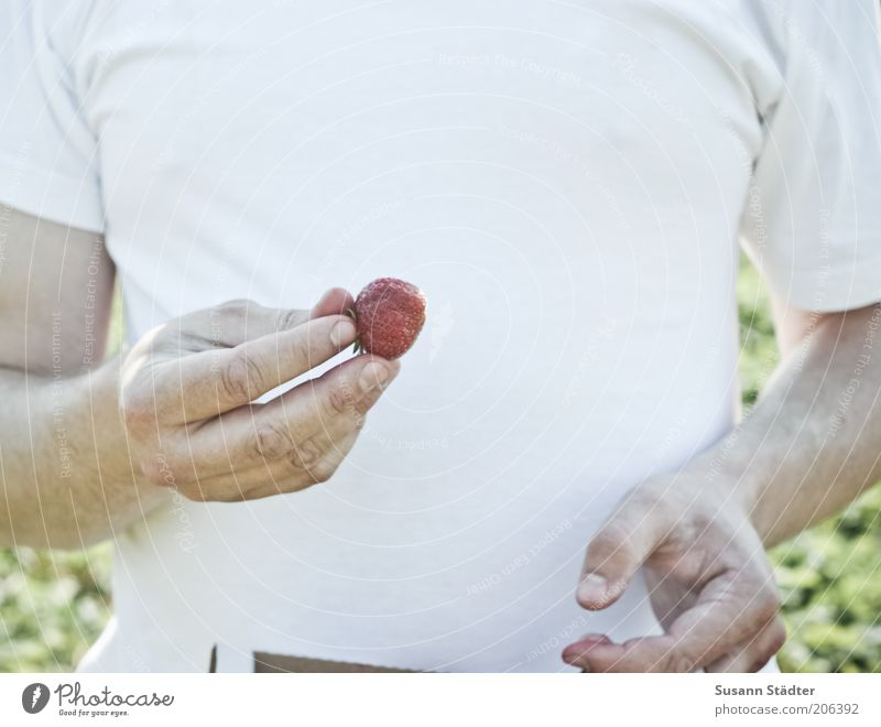 Man Hand Summer Eating Fruit Sweet Healthy Eating T-shirt To enjoy Chest Delicious Harvest Organic produce Organic farming Strawberry Summery