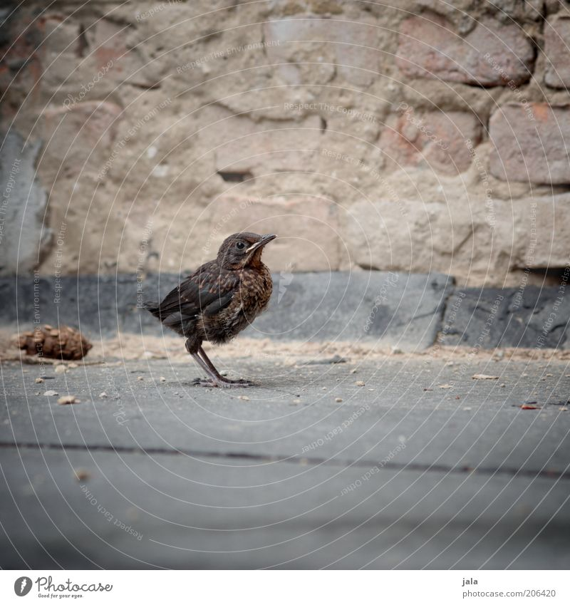 when the children become fledged Animal Wild animal Bird Blackbird Baby animal Stone Colour photo Subdued colour Exterior shot Deserted Copy Space bottom Day