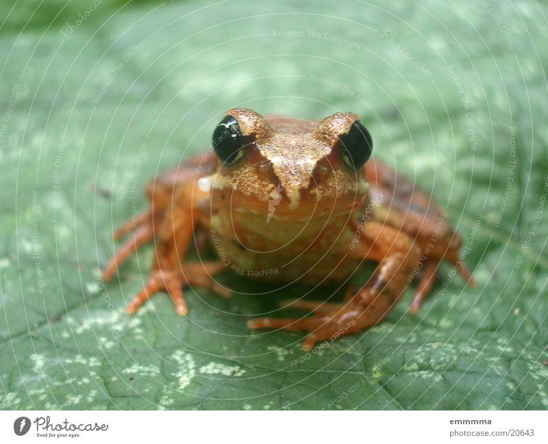 Leaf Curiosity Frog Habitat Wetlands Grass frog