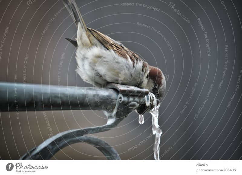 Nature Water Animal Cold Bird Small Drops of water Wet Sit Drinking water Beverage Feather Wing Well Wild animal
