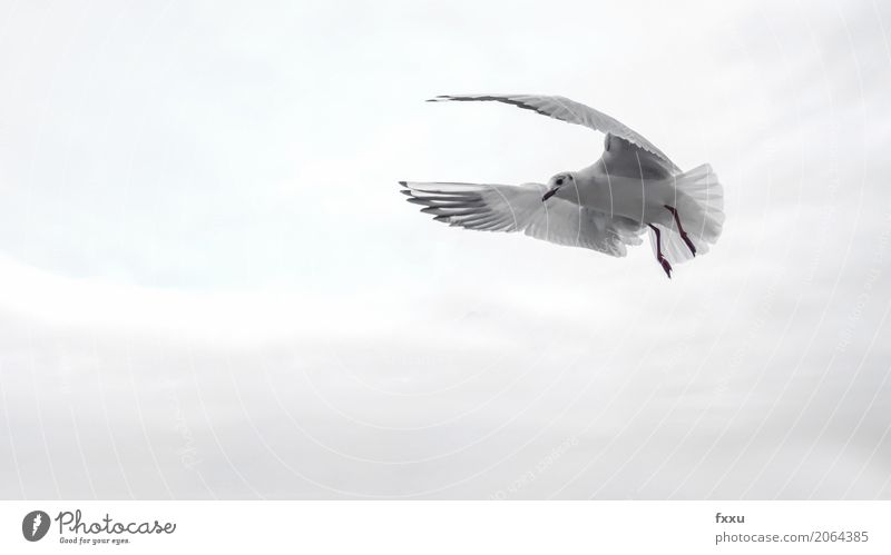 Seagull in Venice Healthy Eating Dish Wing Bird Ocean Flying Gull birds Freedom Water Beak Feather Nature Bright background Ease