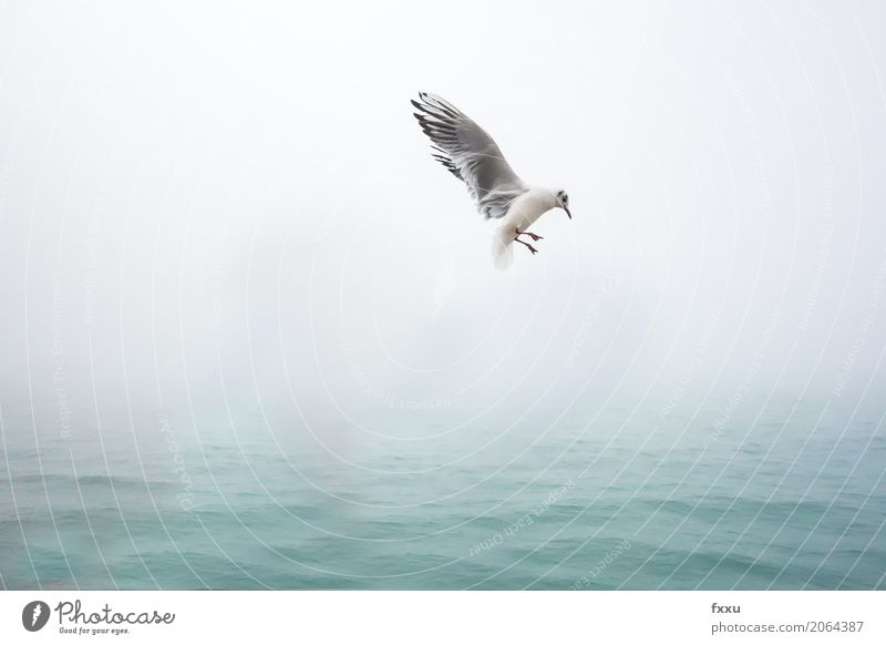 Seagull in Venice Animal Bird seagull 1 Water Flying Free Happy Happiness Spring fever Anticipation Enthusiasm Blue waterfowl Freedom Nature Ease Colour photo