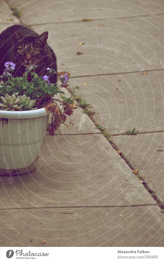 Flower Animal Cat Fear Wait Animal face Observe Curiosity Concentrate Discover Sidewalk Pet Domestic cat Skeptical Flowerpot Cover