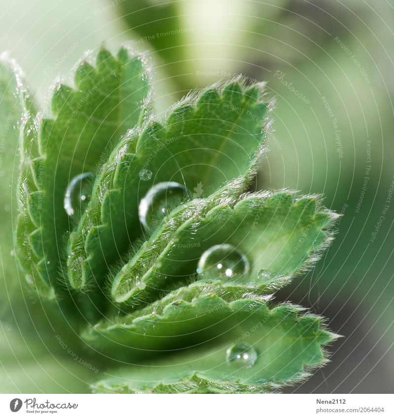 order Environment Nature Plant Water Drops of water Spring Summer Weather Leaf Garden Park Meadow Fluid Wet Round Green Dew Tidy up Damp Morning Colour photo