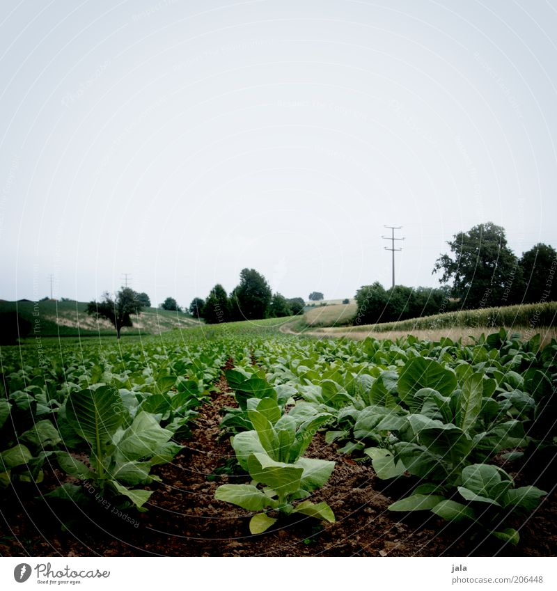 Nature Sky Green Blue Plant Field Agriculture Ecological Organic farming Sustainability Foliage plant Rapes Biological Agricultural crop Sugar beet