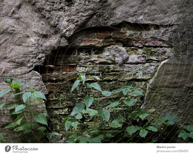 ravages of time Environment Nature Plant Leaf Foliage plant Wild plant Stinging nettle Wall (barrier) Wall (building) Facade Stone wall Plaster Rendered facade