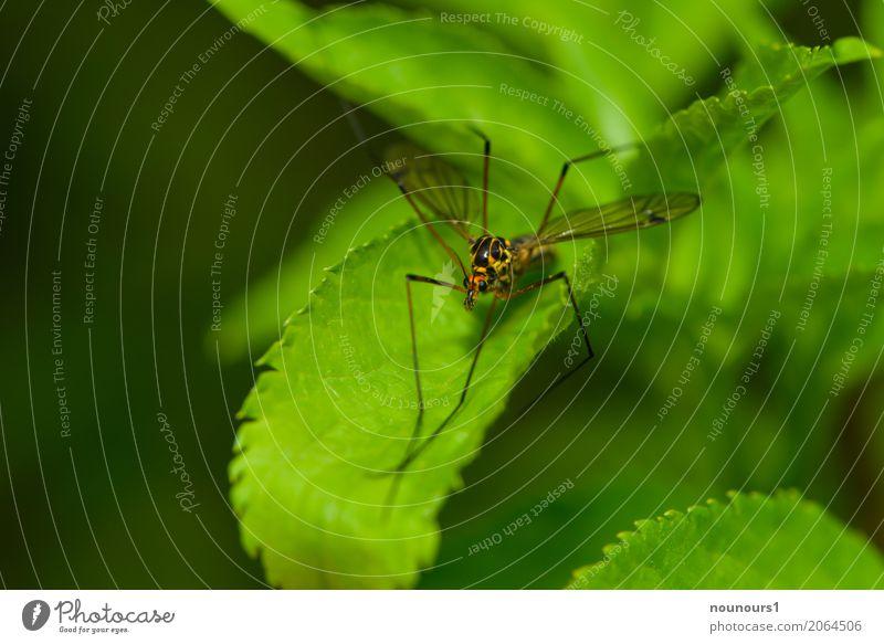 overslept Animal Spring Wild animal Crane fly 1 Lie Looking Sit Esthetic Cool (slang) Elegant Creepy Brown Yellow Green Orange Colour photo Multicoloured