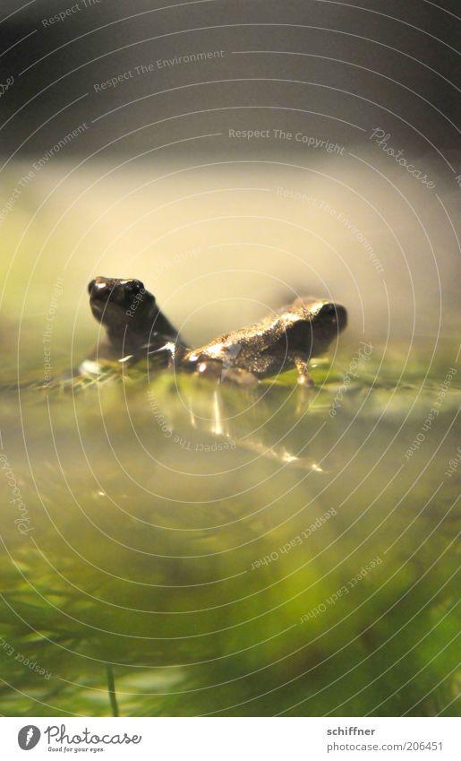 Nature Water Animal Together Pair of animals Small Sit Trust Frog Aquarium Crouch Rutting season Diminutive