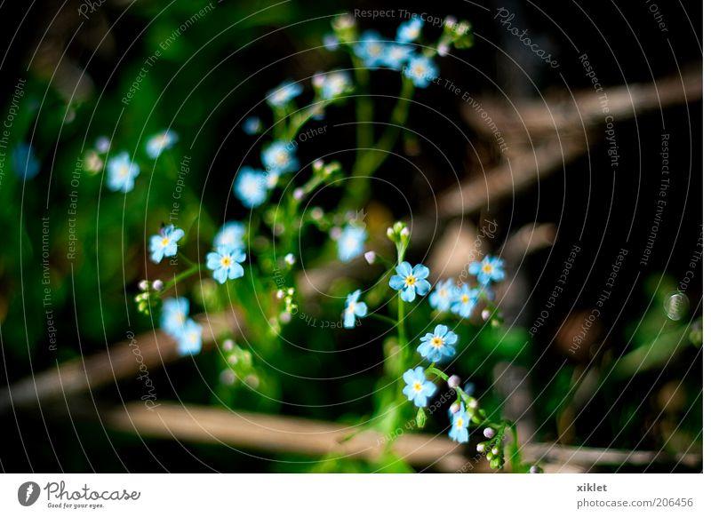small flowers Nature Blue Green Flower Summer Mountain Grass Spring Wind Wild Bushes Heat Limp Sap