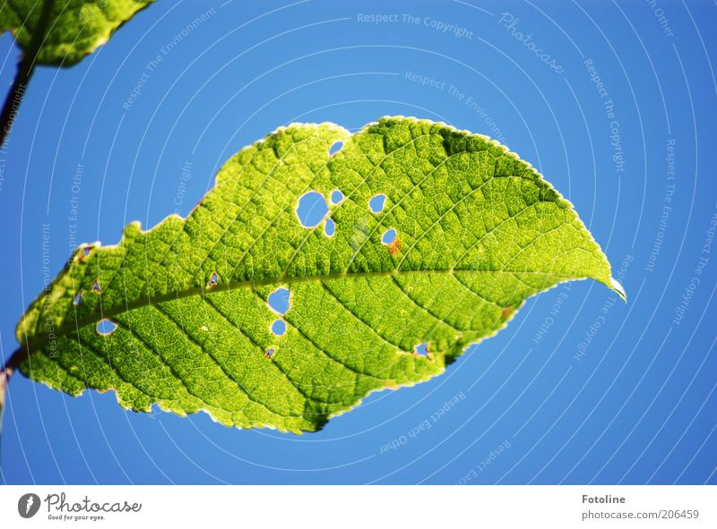 Nature Sky Green Blue Plant Leaf Warmth Bright Weather Environment Hollow Transparent Rachis Cloudless sky Leaf green Translucent