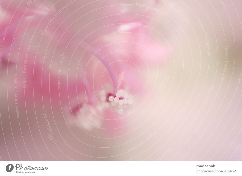 Nature Beautiful Plant Colour Style Blossom Pink Esthetic Soft Pure Delicate Harmonious Blur High-key Blossom leave Light