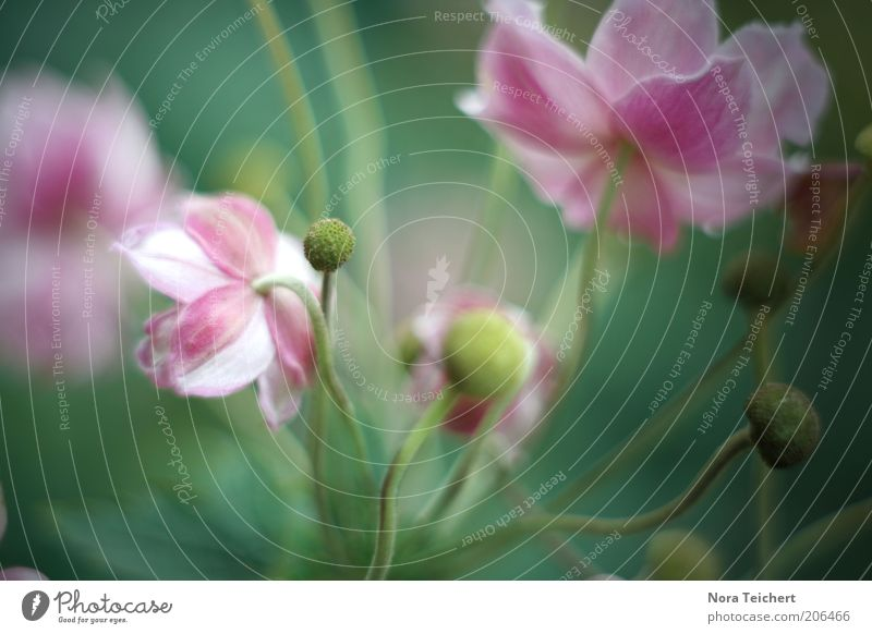 Nature Beautiful Flower Green Plant Summer Colour Life Emotions Blossom Spring Moody Pink Environment Esthetic Growth