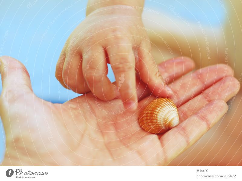 Child Hand Vacation & Travel Playing Small Fingers Gift Leisure and hobbies Infancy Toddler Mussel Animal Grasp Summer vacation Human being Children`s hand
