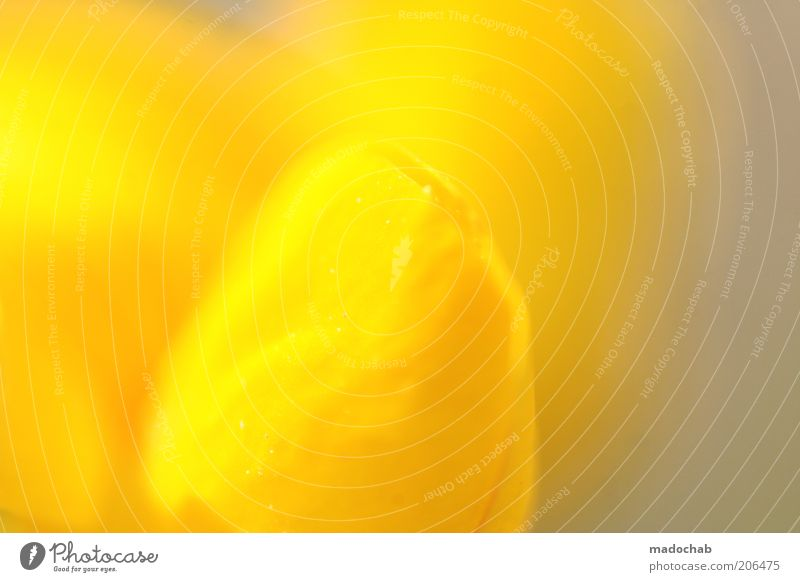 Nature Plant Yellow Colour Blossom Elegant Esthetic Fragrance Abstract Light Structures and shapes