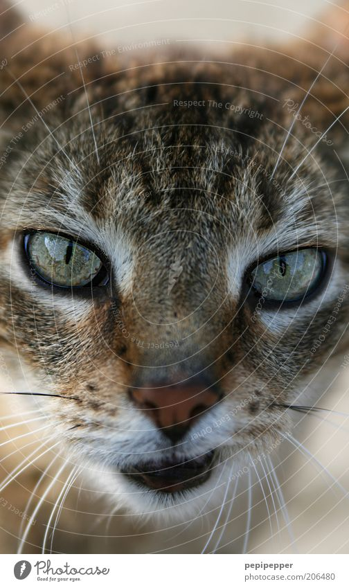 hmm... Animal Pet Cat 1 Beautiful Curiosity Soft Brown Cat eyes Looking Colour photo Exterior shot Deserted Day Blur Central perspective Animal portrait