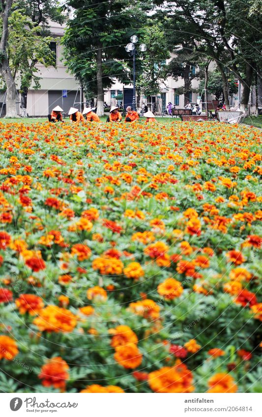Human being Nature Vacation & Travel Plant Tree Flower Leaf Adults Blossom Meadow Feminine Garden Tourism Group Orange Work and employment