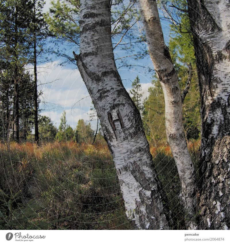 pour l'homme Nature Landscape Sky Beautiful weather Tree Forest Moody Birch wood Birch tree Clearing Furrow H Romance Gentlemen's toilet Colour photo