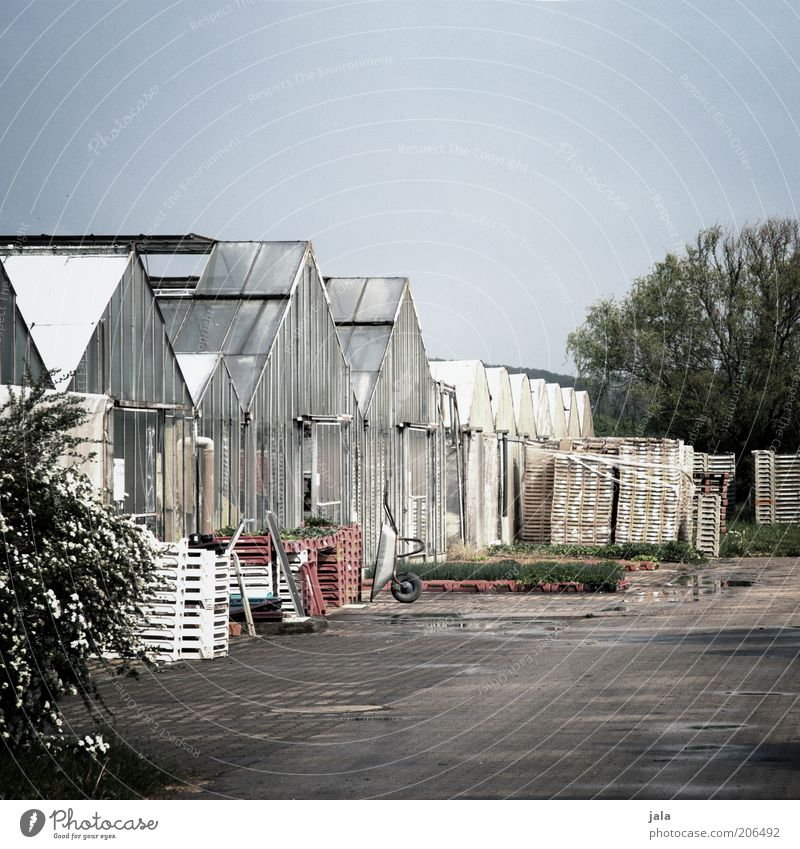 nursery Workplace Company Sky Plant Tree Places Manmade structures Building Greenhouse Environment Colour photo Exterior shot Deserted Copy Space top Day Calm