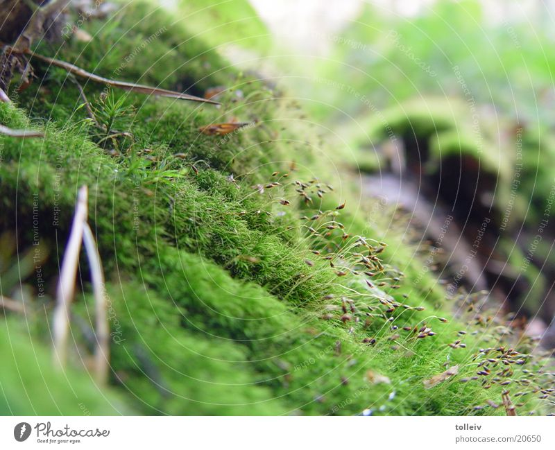 moss Autumn Thaw Detail of a Moosbüchel Moss