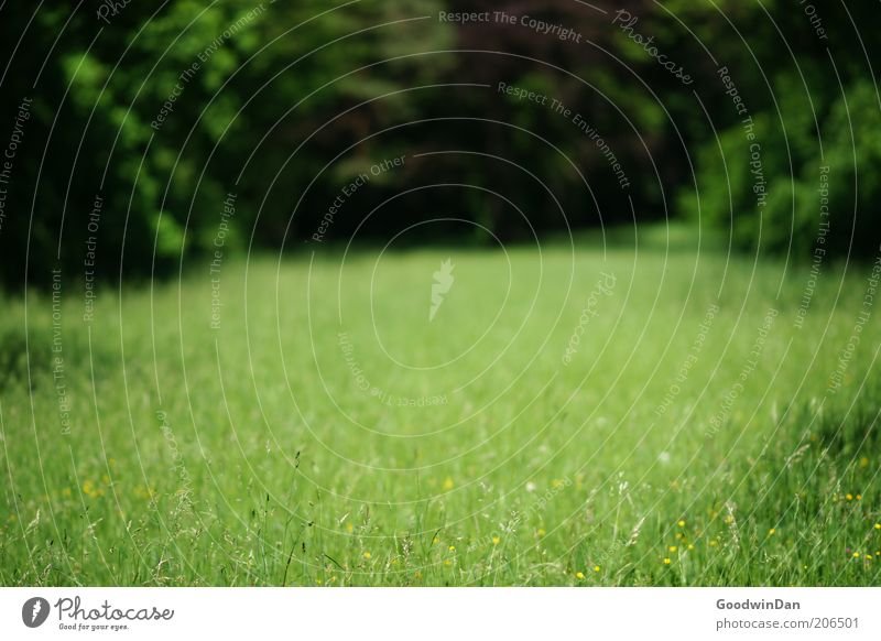 farsightedness Environment Nature Elements Earth Beautiful weather Park Meadow Authentic Free Colour photo Exterior shot Deserted Dawn Light Green Primordial
