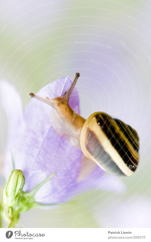 Nature Eyes Animal Above Blossom Environment Observe Wild animal Damp To feed Snail Feeler Flower Slimy Snail shell Bluebell