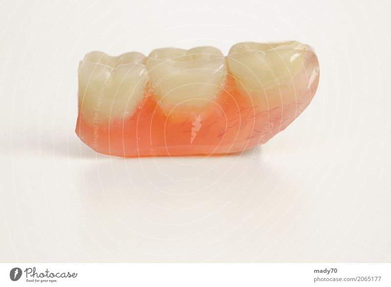 Three prosthetic teeth isolated on white background Health care Medication Laboratory Human being Teeth Bridge Free White False Prosthetic Isolated Artificial
