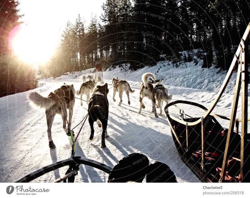 White Sun Vacation & Travel Winter Snow Lanes & trails Dog Ice Running Speed Adventure Frost Driving Group of animals Sporting event Norway