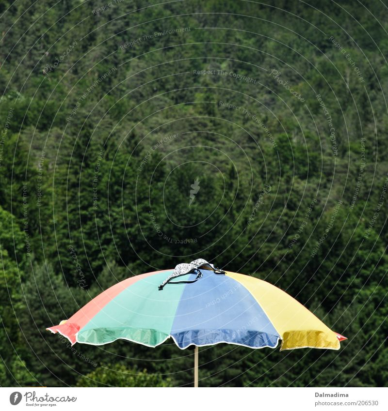 Summer, sun, parasol Vacation & Travel Summer vacation Nature Beautiful weather Sunshade Bikini Forest Leisure and hobbies Tourism Multicoloured Colour photo