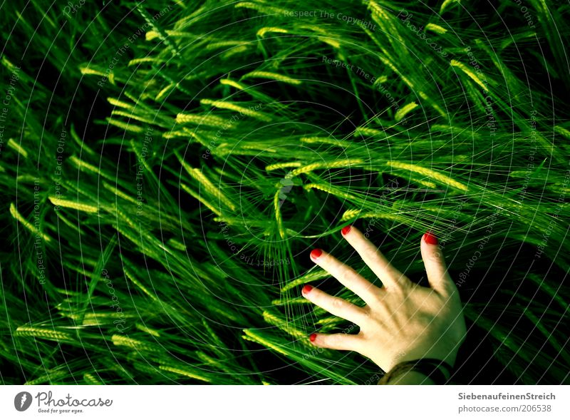 Human being Nature Hand Youth (Young adults) Green Red Summer Life Feminine Movement Field Going Modern Esthetic Growth