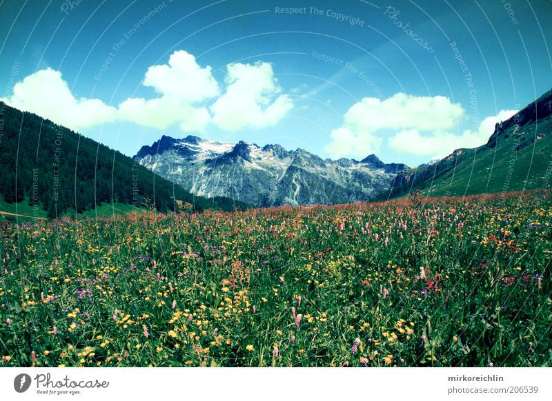 Swiss Mountain Environment Nature Landscape Plant Air Sky Clouds Spring Summer Weather Beautiful weather Flower Grass Meadow Forest Hill Alps Exceptional Blue
