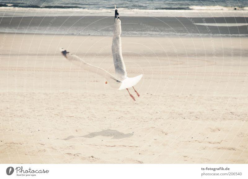 V-Wing Vacation & Travel Summer Summer vacation Beach Ocean Island Waves Animal Elements Water North Sea Bird Seagull Silvery gull Mud flats 1 Flying Free