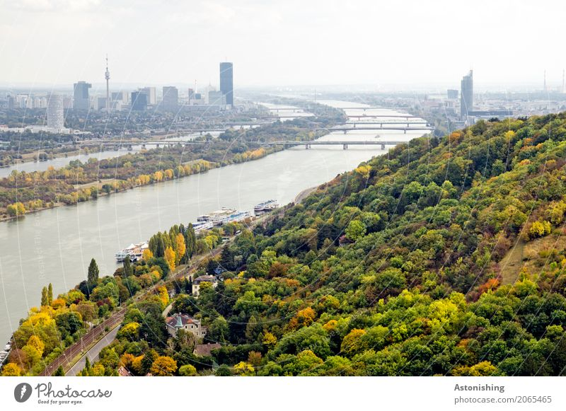 on the Danube Environment Nature Landscape Plant Water Sky Horizon Spring Weather Tree Forest River bank Island Danube Island Vienna Austria Town Capital city