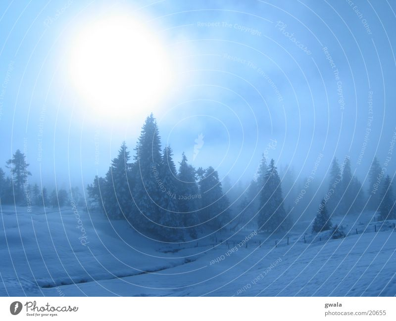 blue fog Colour photo Exterior shot Deserted Copy Space top Day Light Sunlight Back-light Winter Snow Mountain Nature Landscape Clouds Fog Ice Frost Tree Forest