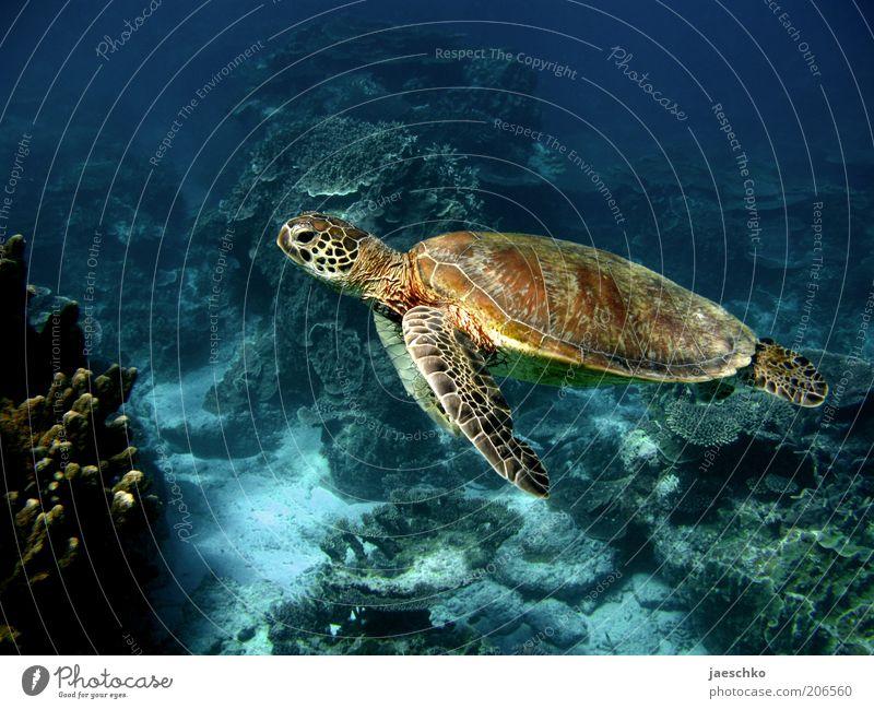 Nature Beautiful Ocean Calm Animal Contentment Elegant Large Free Esthetic Pure Serene Reptiles Exotic Ease