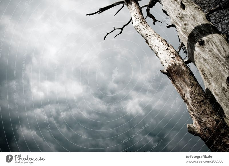 Nature Old Sky Tree Plant Clouds Dark Death Wood Gray Brown Environment Threat Natural Thunder and lightning Tree trunk