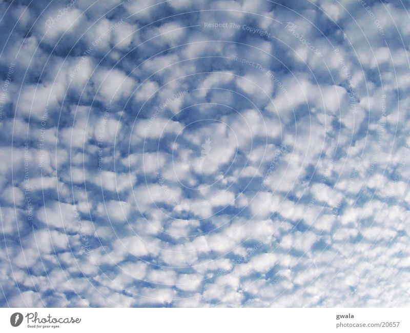 cotton wool clouds Colour photo Exterior shot Pattern Structures and shapes Deserted Day Nature Air Sky Clouds Weather Soft Blue Neutral Background