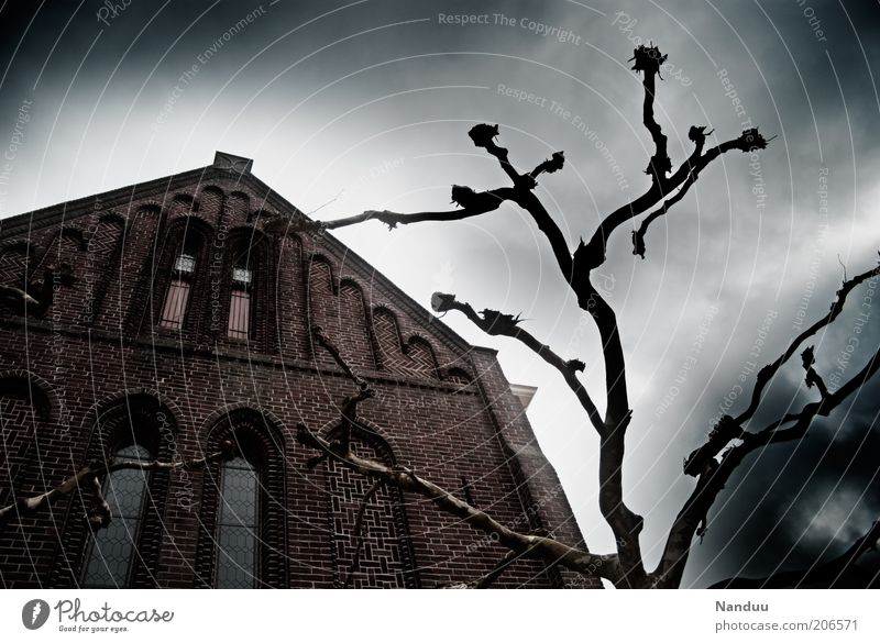 Tree Dark Fear Facade Church Threat Branch Mysterious Creepy Manmade structures Upward Eerie Sparse Apocalypse Apocalyptic sentiment Headstrong
