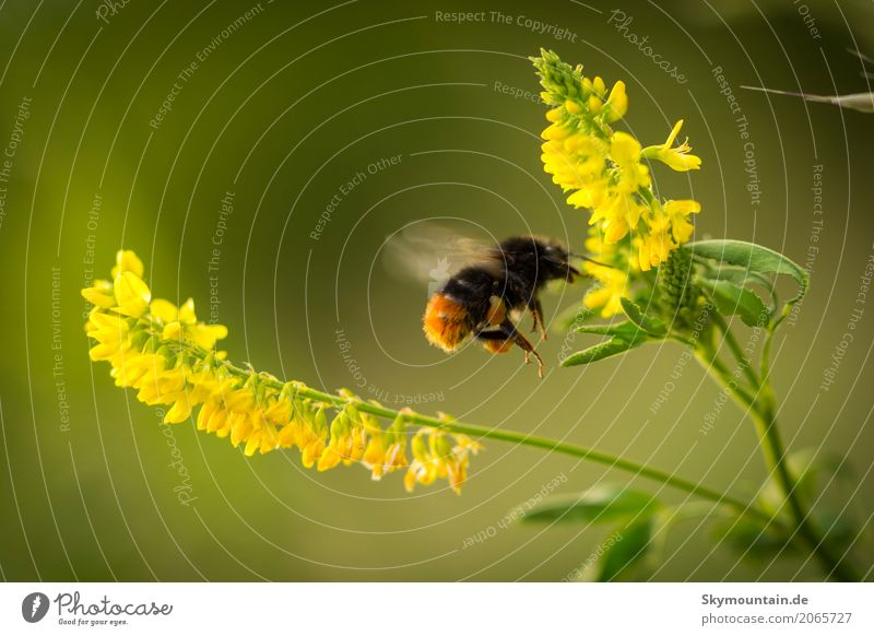 Nature Plant Green Flower Animal Environment Yellow Meadow Movement Garden Brown Flying Orange Park Weather Field